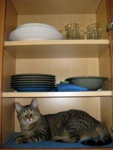 Cat in a cabinet