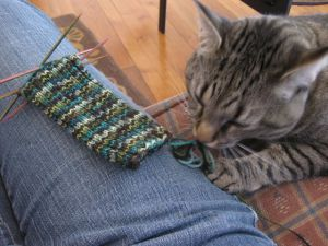 Cat noms yarn. Yum.