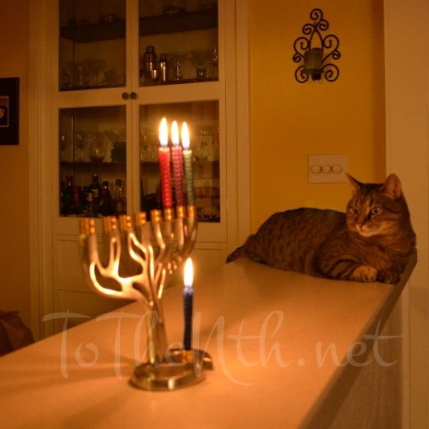 Happy Chanuk-cat! (Kitty gazes at the menorah on the third night of Chanukah.)